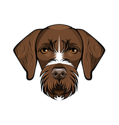 Hunting dog german wirehaired point vector