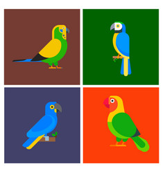 parrots birds breed species animal flayer brochure vector image