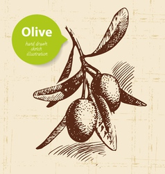 Vintage olive background Hand drawn vector image
