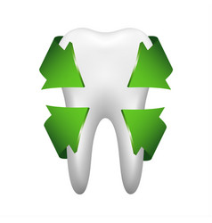 white tooth with four green arrows stomatology vector image