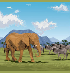 color scene african landscape with elephants and vector image