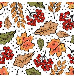 Autumn rowan maple oak leaves fall nature vector