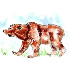 Bear Watercolor vector image