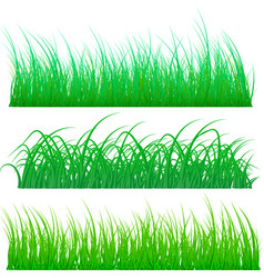 different types of green grass isolated on white vector image
