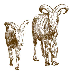 engraving drawing two mountain goats vector image