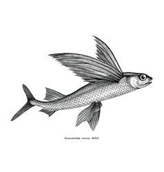 exocoetidae or flying fish hand drawing vintage vector image