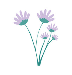 hand drawing lilac color daisy flower bouquet with vector image