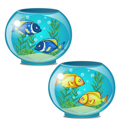 Two aquariums with tropical fish and seaweed vector