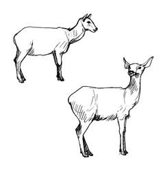 set deers vector image