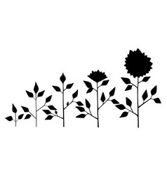 Sunflower plant growth stages silhouette vector