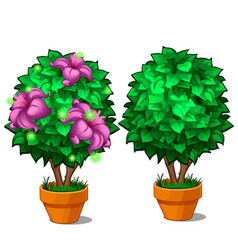 two miniature trees in pots one tree with flower vector image