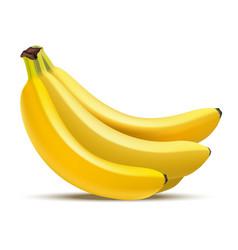 realistic detailed fruit banana vector image vector image