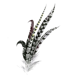 Black and white feathers isolated on white vector image
