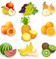 summer fruit vector image vector image