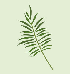 Leave palm tropical natural vector