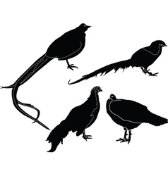 pheasans collection - vector image