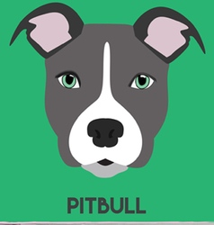 PITBULL vector image