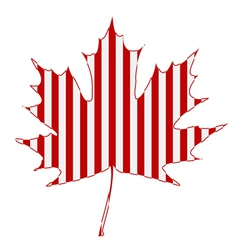 striped maple leaf vector image