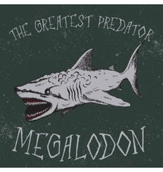 Vintage label with shark-Megalodon vector