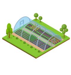 greenhouse isometric view vector image