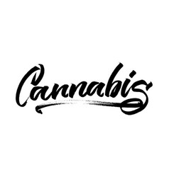 Cannabis modern calligraphy hand lettering for vector