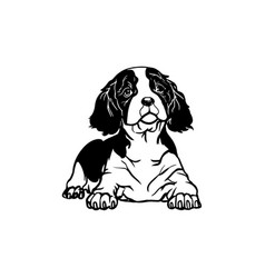 Cavalier king charles spaniel dog - lying cavalier vector