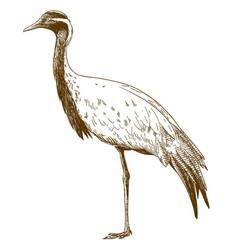 Engraving drawing of demoiselle crane vector