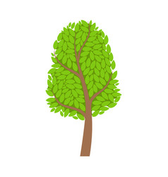 Season tree with green leaves element of a vector