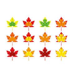 set multicolored autumn maple leaves vector image