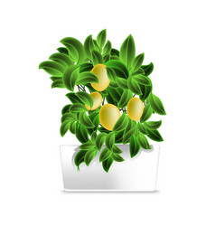 spotted plant lemon tree in a white pot element vector image
