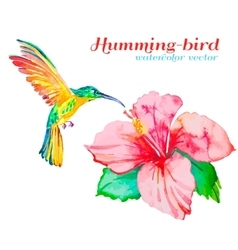 Hummingbirds and hibiscus Tropical flower and vector image vector image