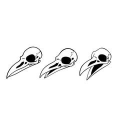 set three simple bird skulls vector image