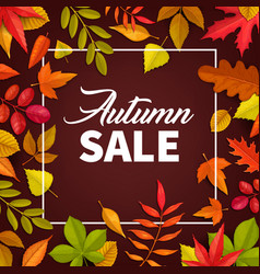autumn sale poster fallen leaves offer vector image