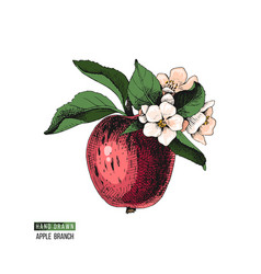 Flowering apple branch vector