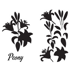 Lilly silhouette bouquet vector