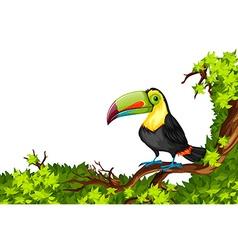 Toucan standing on branch vector