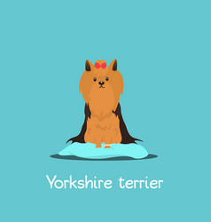 an depicting a cute yorkshire terrier vector image