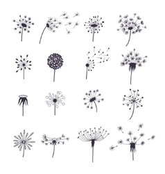 Dandelion Fluffy Flower and Seeds Set vector