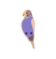little budgerigar parrot bird cute birdie home vector image
