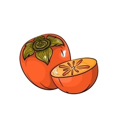 Persimmon on white background vector