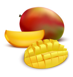 realistic detailed fruit mango vector image