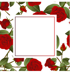 Red rose on white banner card vector