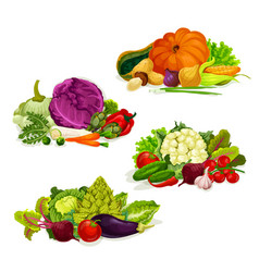 vegetables vegetarian food salads and cabbages vector image