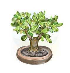 Watercolor money tree bonsai vector