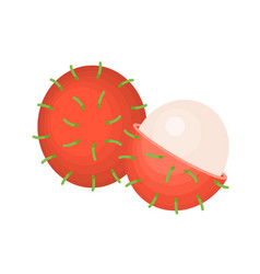 whole and cross section of rambutan vector image
