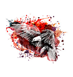 Color of a flying eagle vector