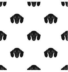 dog breed dachshundmuzzle of the dachshund vector image