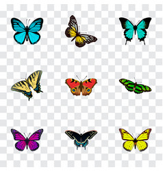 set of moth realistic symbols with yello-wing vector image