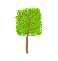 tree with a square crown and green leaves element vector image
