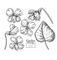 Violet flower drawing hand drawn engraved vector